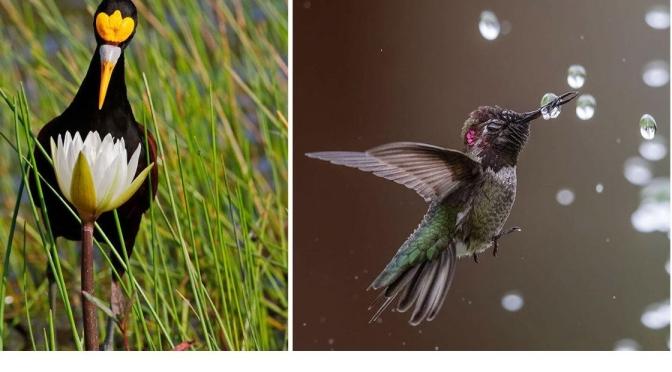 """Photography Contests: """"2020 Audubon Awards"""""""
