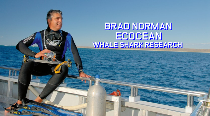 "New Podcast Interviews: Whale Shark Scientist Brad Norman – ""Ecocean"""