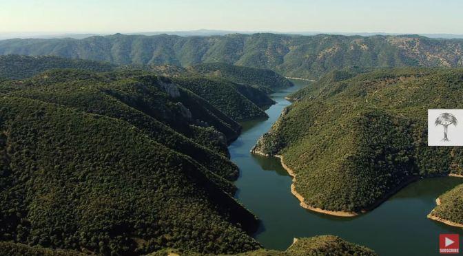 "Travel & Wildlife: The ""Iberian Lynx"" Of The Sierra Morena In Spain (Video)"