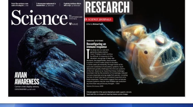 TOP JOURNALS: RESEARCH HIGHLIGHTS FROM SCIENCE MAGAZINE (SEPT 25, 2020)