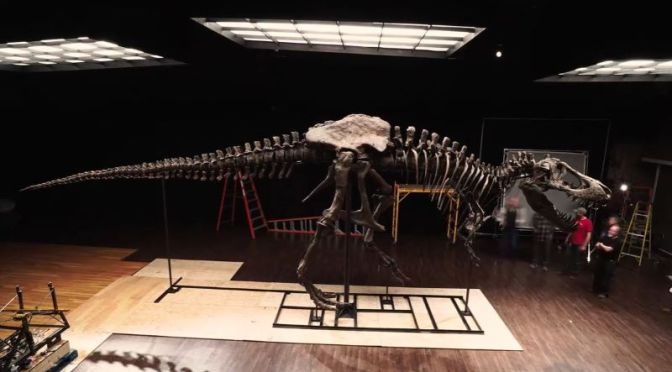 "Paleontology: Largest And Most Complete ""T-Rex"" Skeleton To Be Auctioned"