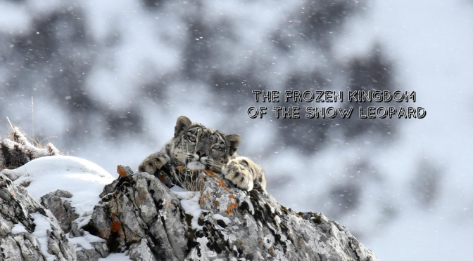 "Wildlife Film Trailers: ""The Frozen Kingdom Of The Snow Leopard"" (Video)"