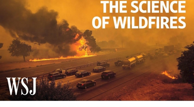 "New Environment Videos: ""The Science Of Wildfires"""
