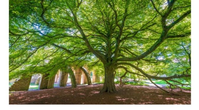 Preservation: 'Tree Of The Year 2020' In England, Wales & Scotland (Video)
