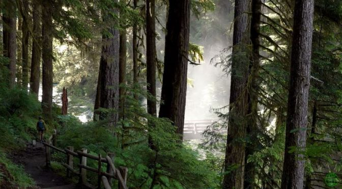 Top New Travel Videos: 'Olympic National Park' – Washington State (2020)