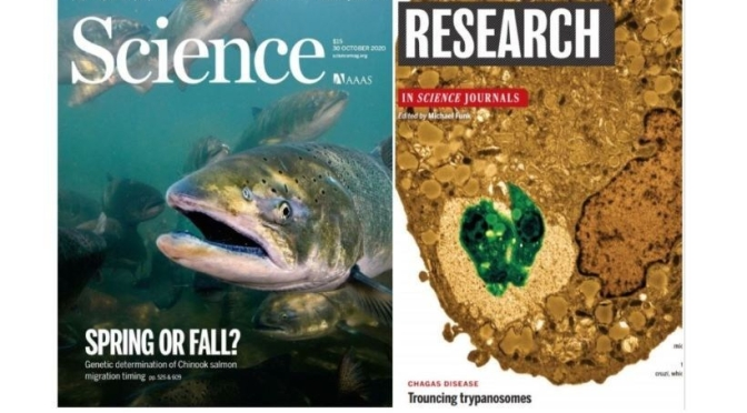 TOP JOURNALS: RESEARCH HIGHLIGHTS FROM SCIENCE MAGAZINE (OCT 30, 2020)