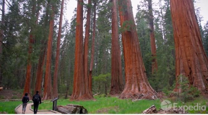 New Travel Guide Videos: 'Sequoia And Kings Canyon National Parks'