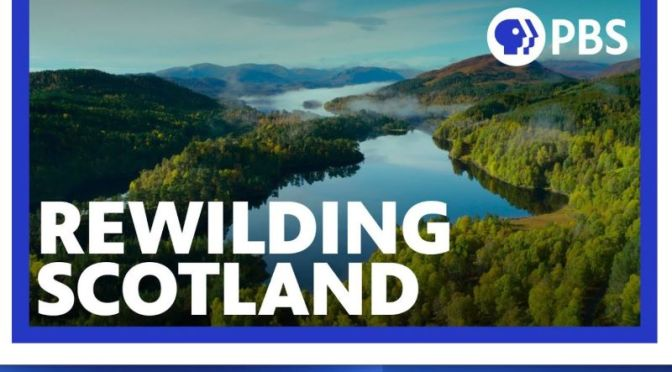 Nature & Wildlife Video: 'Rewilding Scotland' (PBS)