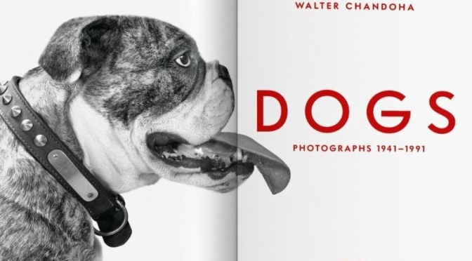 New Photography Books: 'Dogs – Walter Chandoha', 1941-1991 (Taschen 2020)