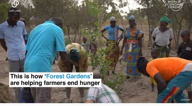 Ecology & Culture Video: 'Forest Gardens' Helping To End World Hunger