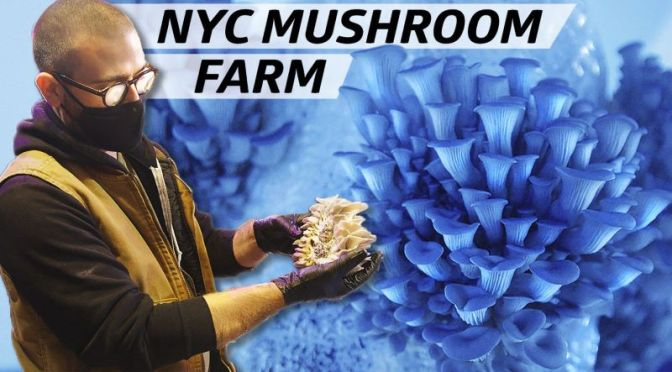 Foods & Dining Video: 'Smallhold Farms' Grows Rare & Unique Mushrooms For New York City Eateries