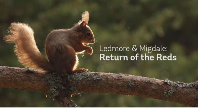 Wildlife: 'Return Of The Reds' – Rewilding Red Squirrels Into Scotland