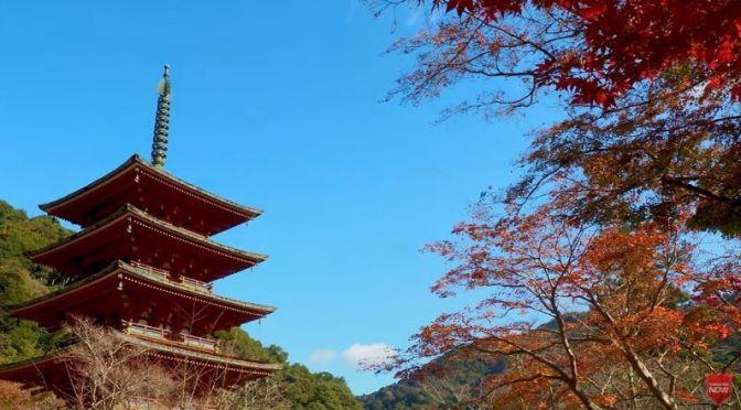 Autumn Travel: Hasedera Temple, Kamakura, Japan