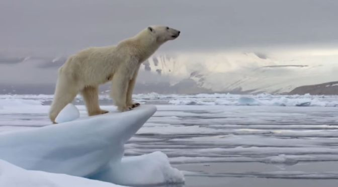 Arctic Wildlife: 'Best Of Polar Bears' (BBC Video)