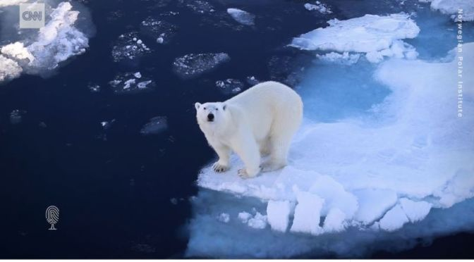 Arctic Wildlife: 'Tracking Polar Bears With Emails'