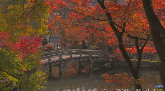 Autumn In Japan: 'Eikando Temple, Kyoto' (Video)