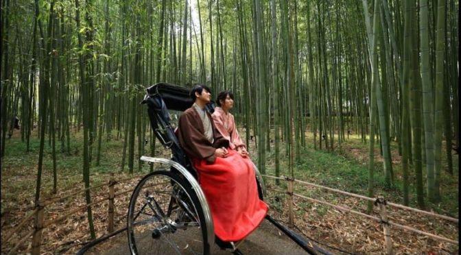 Autumn Walking Tours: 'Arashiyama Bamboo Grove' In kyoto, Japan