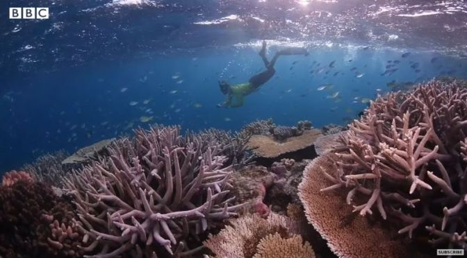 Conservation: Mapping 'The Great Barrier Reef' To Help It Survive (BBC Video)