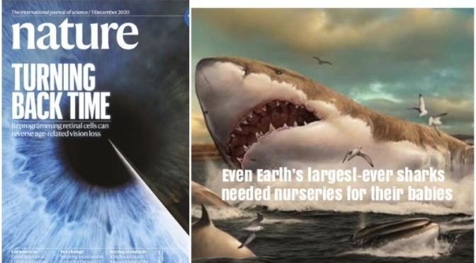 Science: Nature Magazine Research Highlights