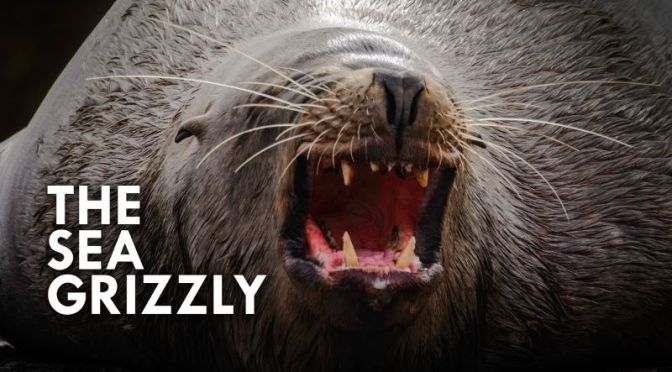 Ocean Wildlife: 'Sea Lions – Grizzly Bears Of The Sea'