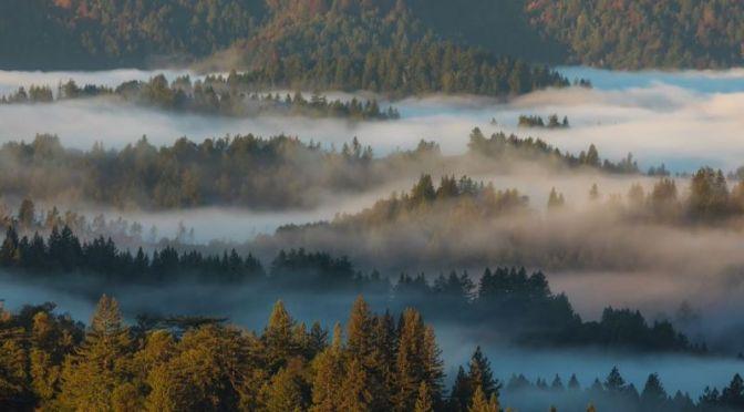 Timelapse Travel: 'Santa Cruz Mountains' In Northern California