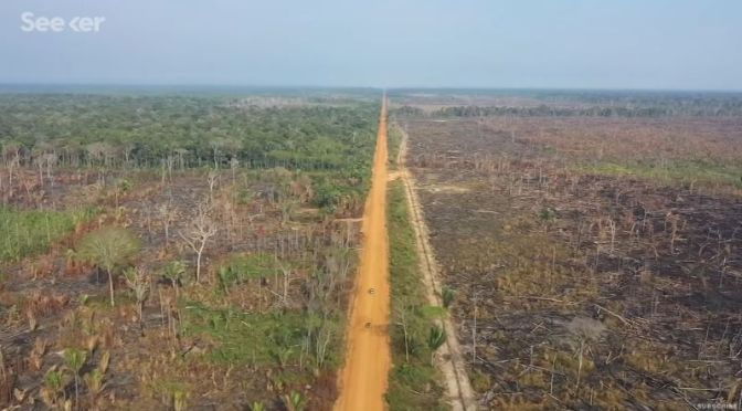 Deforestation: 'Amazon Rainforest' – Becoming A  Savannah In 15 Yrs? (Video)