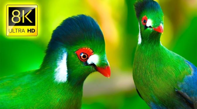 VIEWS:  Birds Of The World In '8K ULTRA HD' (VIDEO)