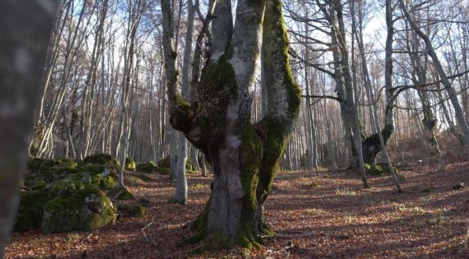 Wilderness Timelapse: 'Spirit In The Forests' Of Abruzzo, Italy (Video)
