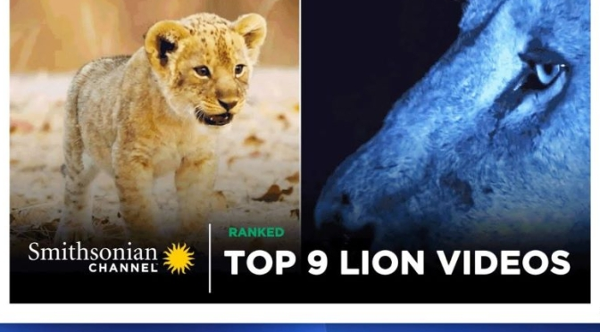 Wildlife & Travel: 'Top 9 Lion Videos' From The Smithsonian Channel