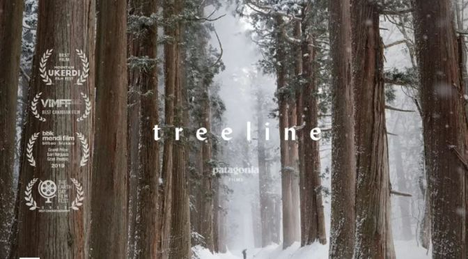 Top Short Films: 'Treeline'