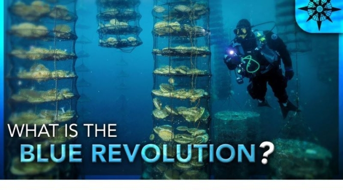 Future Of Food:  The 'Blue Revolution' (Video)