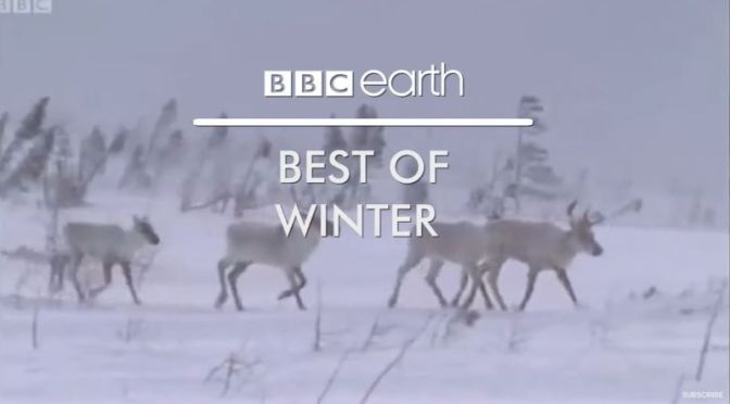 Wildlife: 'Best Of Winter' From BBC Earth (Video)
