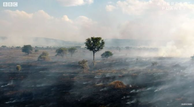Ecology: Benfits Of 50% Of Serengeti Grasslands Burning  Each Year (Video)