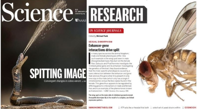 TOP JOURNALS: RESEARCH HIGHLIGHTS FROM SCIENCE MAGAZINE (JAN 22, 2021)