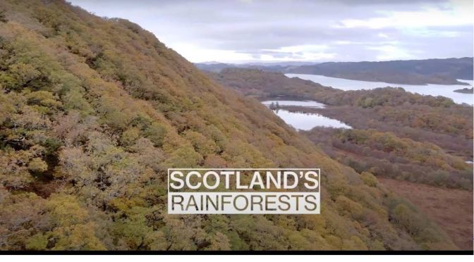 Ecosystems: 'Scotland's Rainforest' (HD Video)