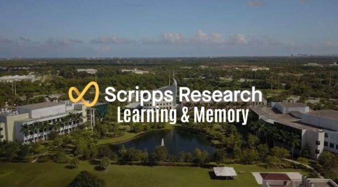 The Brain: 'Learning & Memory' – Neuroscience & Disease Research (Video)