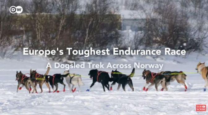 Extreme Sports: Norway's 'Finnmarksløpet Dogsled Race' – Europe's Toughest