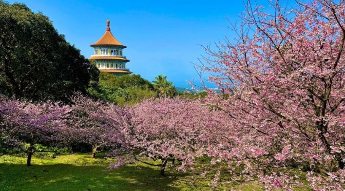 Views: 'Cherry Blossoms' At The 'Temple Of Heaven' In Taipei, Taiwan (Jan 2021)