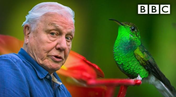 Nature Views: 'Glamorous Hummingbirds' – David Attenborough (BBC Video)