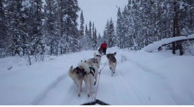 Views: Dog Sledding In Kiruna, Sweden (Video)
