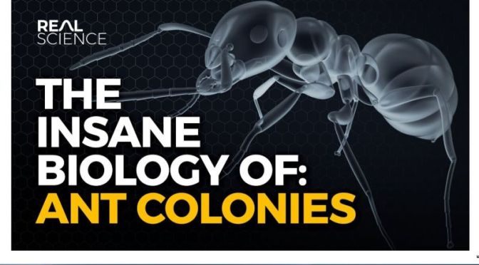 Science: 'Insane Biology Of Ant Colonies' (4K Video)