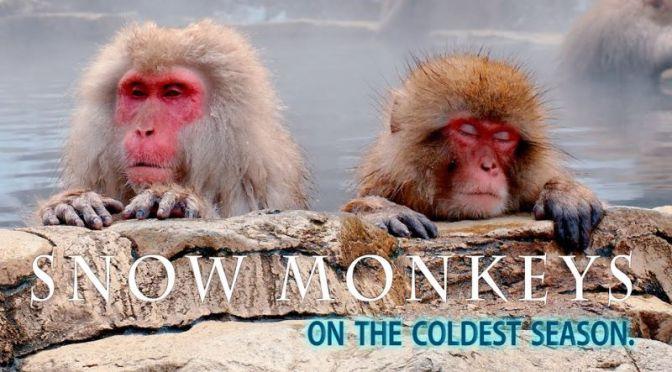 Winter Views: 'Snow Monkeys' In Jigokudani Park, Japan (Video)