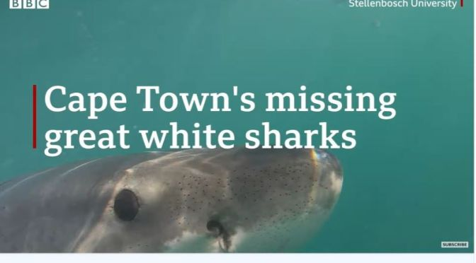 Oceans: The Great White Shark Decline Off Cape Town, South Africa (BBC)