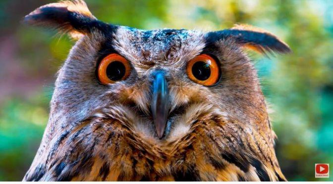 Views: 'Owls' (8K Video)