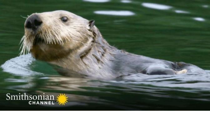 Winter Wildlife: A River Otter Survives In Upper Peninsula Of Michigan
