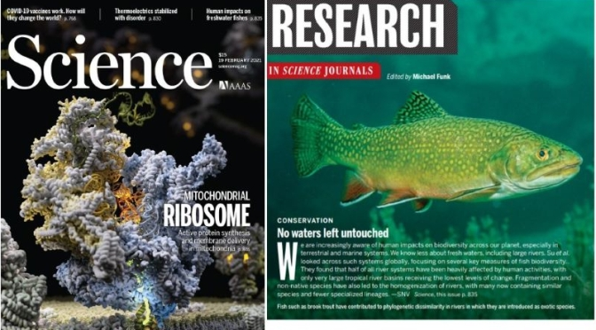 TOP JOURNALS: RESEARCH HIGHLIGHTS FROM SCIENCE MAGAZINE (FEB 19, 2021)
