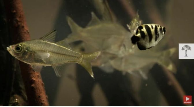 Wildlife Insider: 'The Archerfish – A Master Hunter With Physics'