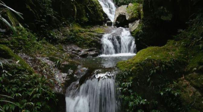 Views: 'Toolona Creek Waterfalls', Lamington National Park In Australia