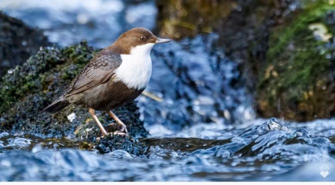 Top Bird Photography: 'Herons, Dippers And Wrens In Norway' (Video)