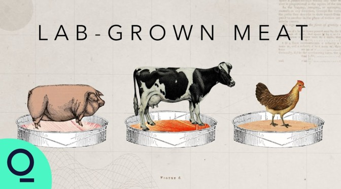 Future Of Food: 'Lab-Grown Meat' (Video)
